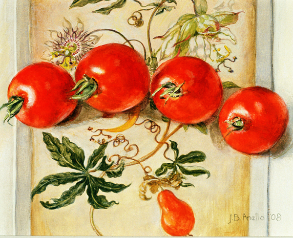 Tomatoes on Merian card