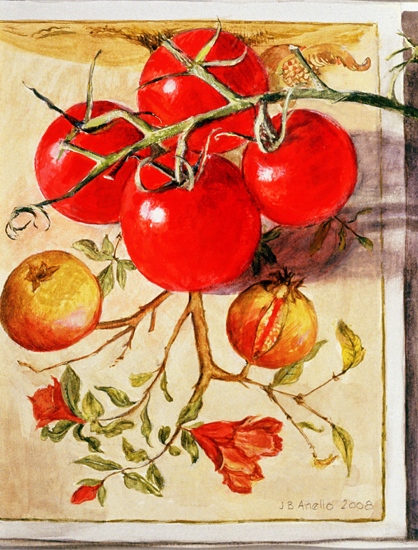4 Tomatoes on Merian card
